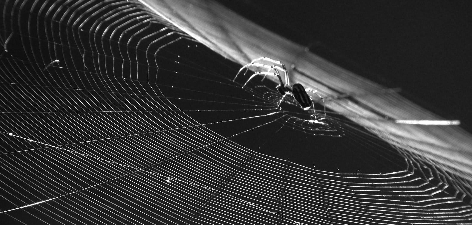 O čom diskutuje darknet v časoch globálnej pandémie?